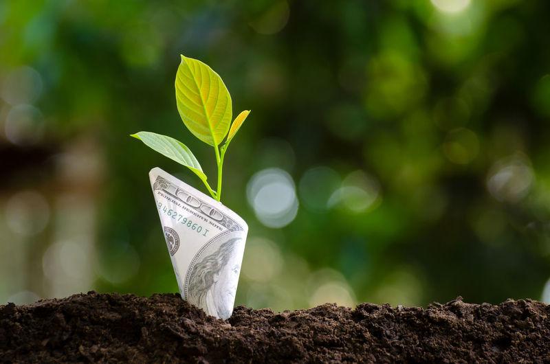 Banknotes tree