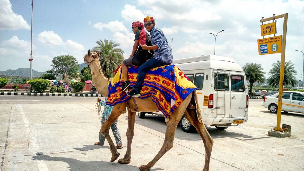 SWAG ♥ Camelriding Awesome_shots Life's Simple Pleasures... 😎 EyeEmNewHere Adapted To The City