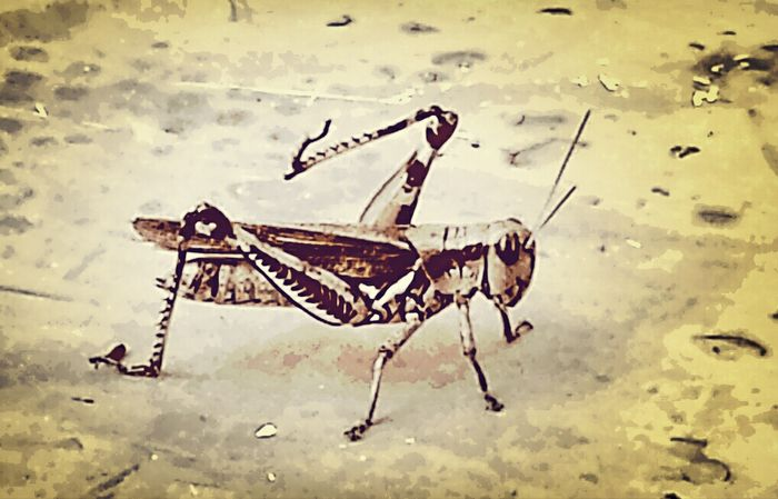 Jimminey Cricket. Check This Out Marco Solo Eye Em Nature Lover