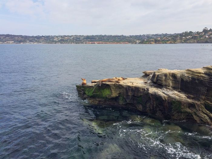 Been There. La Jolla Cove Water Sea Nature Tranquility Beauty In Nature Tranquil Scene Sky Scenics No People Waterfront Day Outdoors
