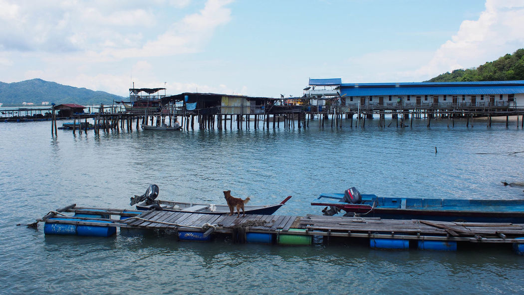 Tranquility view of blue ocean and blue sky on Pangkor Island, Malaysia Architecture Ocean View Pangkor Island Scenic Blue Blue Sky Cloud - Sky Day Dog Jetty Jetty View Nature Ocean Outdoor Outdoors Outrigger Rural Life Rural Scene Sea Sea View Sky Transportation Water White Wooden Jetty