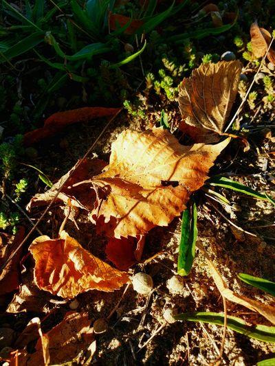 Herbst , die