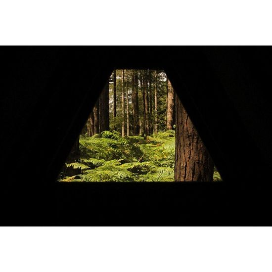 House Green Pines Sherwood photgraphy adventuretime adventure outside friends fun green trees