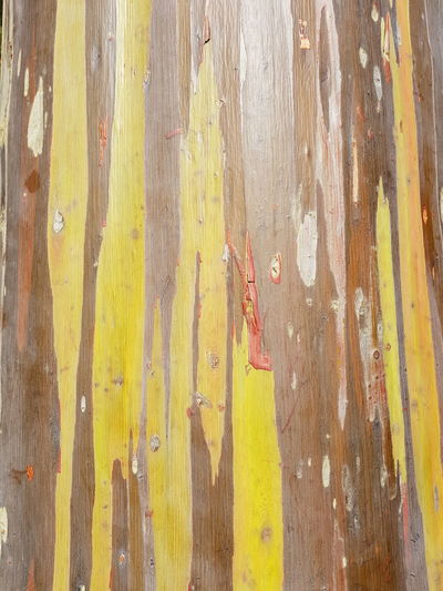 rainbow bark Travel Thailand Bark Bark Texture Backgrounds Full Frame Pattern Textured  Abstract Rough Yellow Close-up No People Day Outdoors