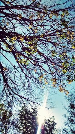 Tree *-* Sky Great Afternoon