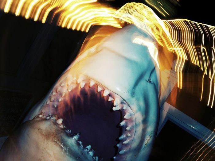 Shark at night, shooting with the Samsung Galaxy Zoom Galaxyzoom