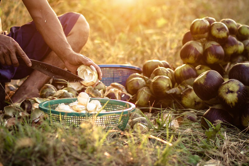 Basket Body Part Container Day Farmer Field Food Food And Drink Freshness Hand Healthy Eating Holding Human Body Part Human Hand Land Market Men Occupation One Person Outdoors Preparation  Real People Wellbeing