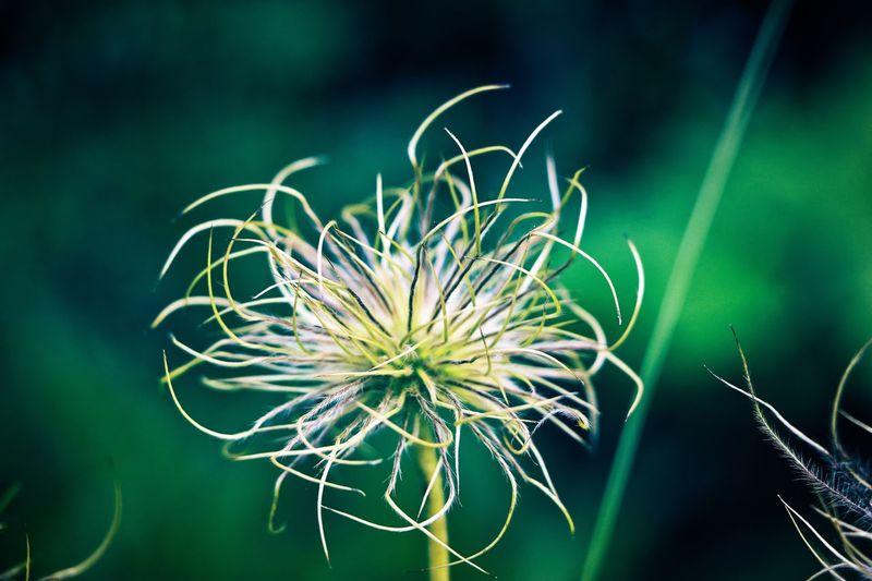 ~ plant ~ Plant