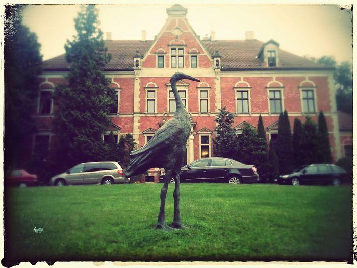 Wielki Ptak Pałacowy