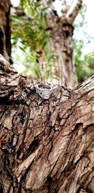 She said Yes! #LoveLife  #Nature  #springtime #bridetobe2018 #loveinspringtime #beautiful #underthetree Allher #onfocus Tree Textured  Close-up Tree Ring