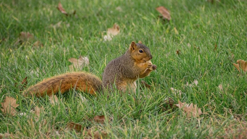 Ritzy Lunch Nature Eating Animals Squirrel Ritz Cracker Lunch