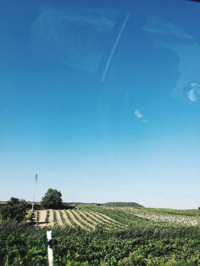 Nature Sky Growth Field No People Agriculture Day Outdoors Beauty In Nature Blue Clear Sky Scenics Rural Scene Tree Irrigation Equipment Freshness