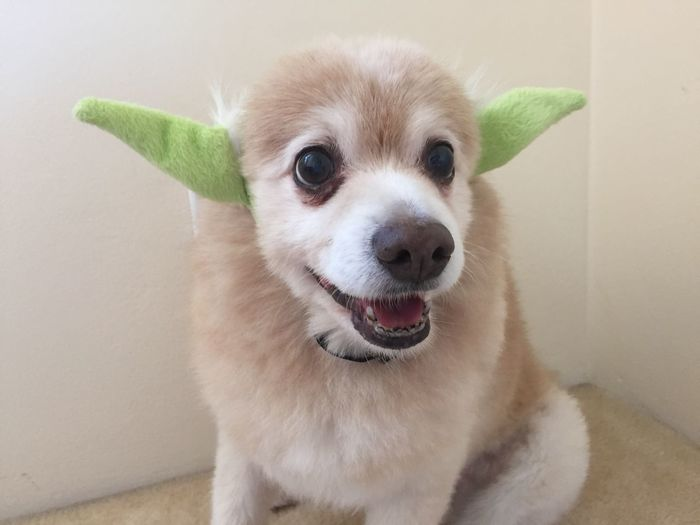 Artificial Dog With Green Ear Against Wall During Halloween