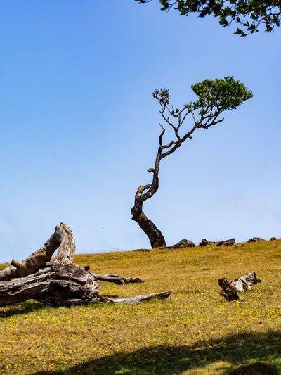 View of tree on field against clear sky