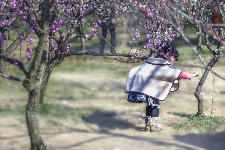 The little girl in the Plum Grove Plant Nature One Person Tree Growth Lifestyles Flower Leisure Activity Day Child Childhood Outdoors Springtime Plum Blossom Plum Grove Plum Plum Blossom Views Little Girl Look At The Flower