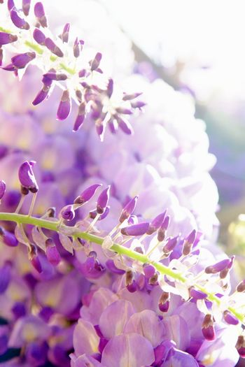 Background Beauty In Nature Blossom Bunch Of Flowers Close-up Day Flower Flower Head Flowering Plant Fragility Freshness Full Frame Growth Lilac Nature No People Outdoors Petal Plant Purple Selective Focus Spring Springtime Vulnerability