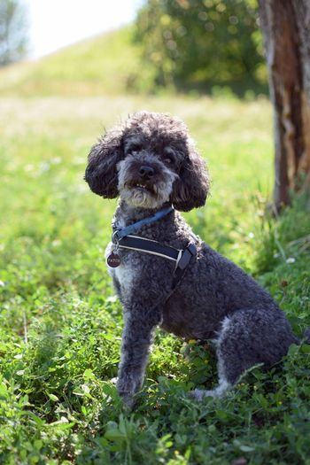 Close-up portrait of dog sitting on grass