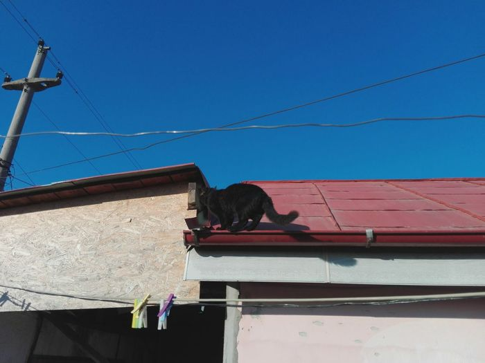 Black Cat On Roof WOLFZUACHiV Photography VERONiCA Photography Veronica IONITA Photography VERONiCA WOLFZUACHiV Photography Ionita Veronica Photography Ionita Photography Pufosenii WOLFZUACHiV Pets EyeEm Selects No People No Person Eyeem Market Huaweiphotography Huawei Photography On Market WOLFZUACHiV Photos The Week On EyeEm Animal Body Part Cat Roof Clothespins One Animal Low Angle View Outdoors Clear Sky Sky Blue Sunlight Feline