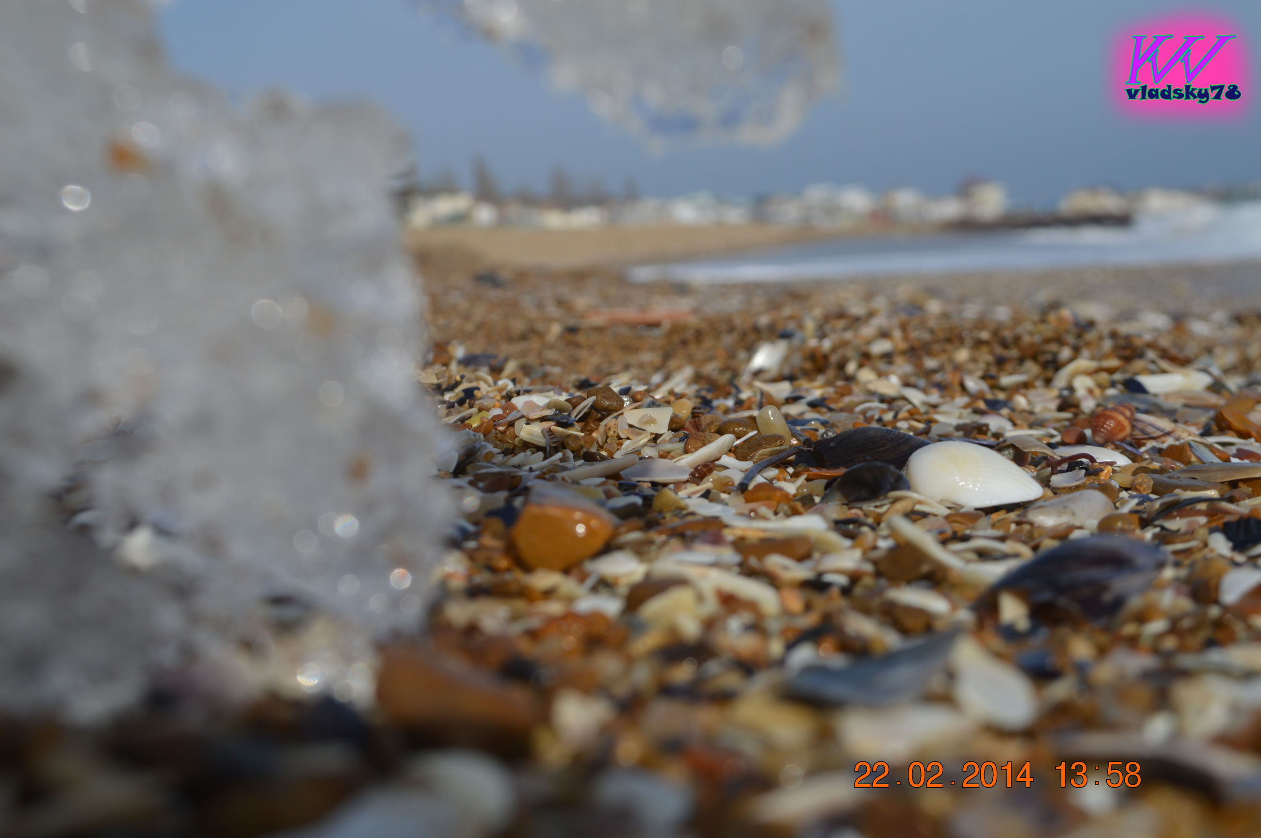 selective focus, no people, beach, day, outdoors, close-up, food, nature, sky