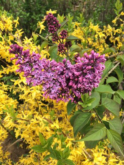 Flower Spring Great Atmosphere