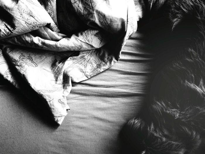 Dog Love Dog Collection Bed Sleepy Sleeping Sleeping Cat Sleep Bedtime Dream Sleeplessness White Color Blackandwhite Black & White Blackandwhite Photography Black And White Black And White Collection  Cozy Love Lovelydog  Cozytime Cozy Moments