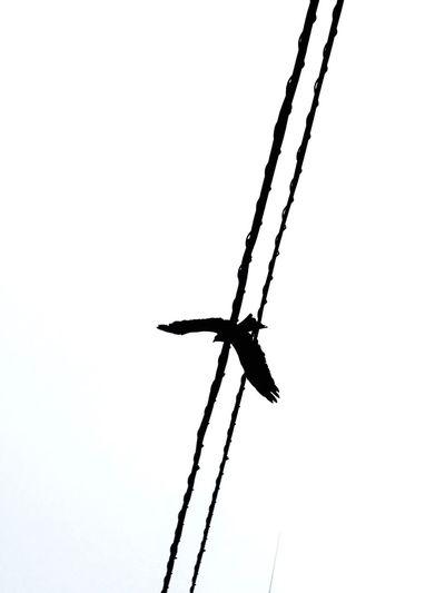 Clear Sky Bird Bird Photography LINE