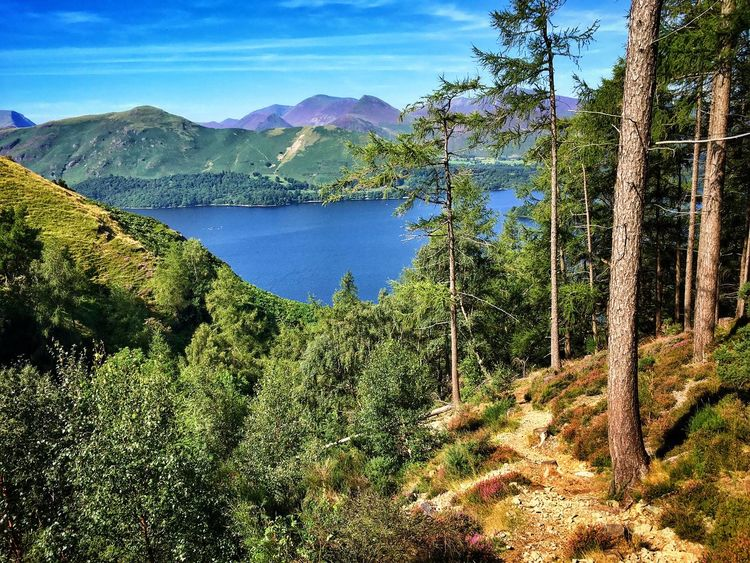 Walla Crag Keswick Derwentwater Derwent Water On A Hike Nature No People Enjoying The Sights Nice Views Forest Trees Hill Outdoors Hiking Summer