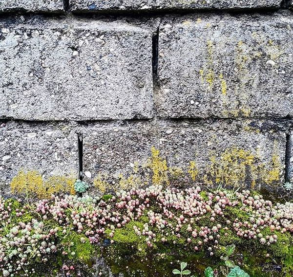 Strange and beautiful flowers on concrete blocks. When it grows on nothing... Landscape Flower Material Plant Wall Naturallandscape Nature_shooters Naturelove Color