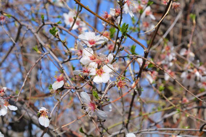 Spring Flowers Flowers EyeEm Nature Lover Nikonphotography Naturalovers