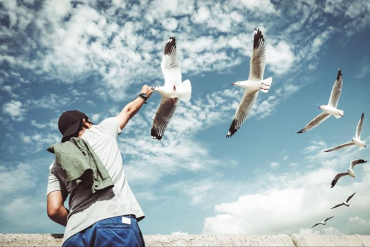 Amazing fantastic image hipster young man feeding seagulls, many birds flying in sky Minimalism Conceptual Less Is More Success Cropped Food Beautiful Great Wings Many Man Animal Flying Bird Feeding  Amazing Fantastic Flying Cloud - Sky Sky Nature Bird Day Casual Clothing Low Angle View Seagull Motion Outdoors Animal Wildlife Leisure Activity