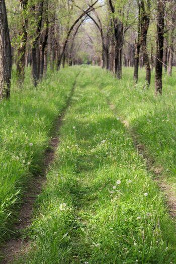 Grass The Way