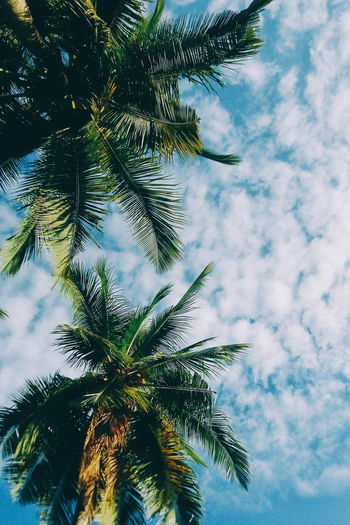 See in a different angle 🌴 One of my favorite shot of mine ♥ Sky Nature Tree Low Angle View Beauty In Nature Outdoors Vscocam Eyeem Philippines Eyeemph VSCO Candyminimal Candy Minimal Mobilephotography Angle