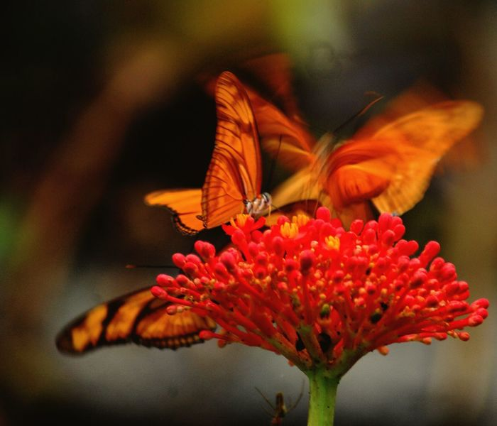Butterfly Movement Macro Tropical Beauty Insect Photography Orange Color Flora And Fauna Outdoor Photography Close Up Nature Tropical Paradise Perfection Nature Flower