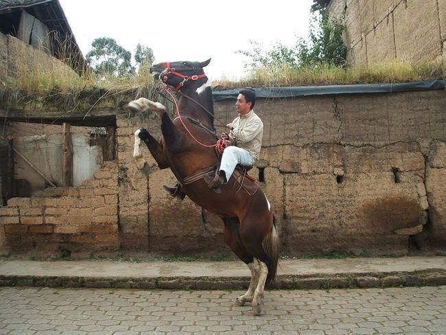 De rodeo en el pueblo. Enjoying Life San Isidro Hello World Mauriciojacome Hello World Horses Horses Horses