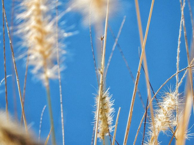 Soft Focus Grasses Karen Grace Andalucía Spain♥