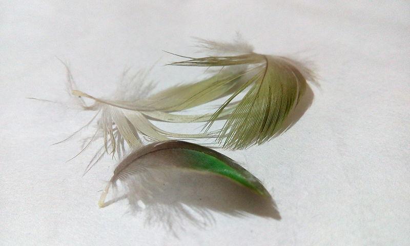 43 Golden Moments EyeEm Team EyeEm EyeEm Best Shots EyeEm Gallery Exceptional Photographs Limb Wing Bird Wings Quill FIN Plum Pinion Bird Plumage