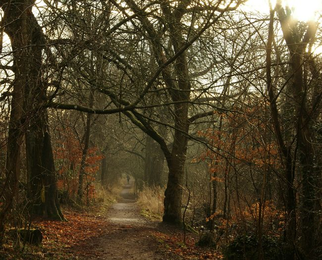 Autumn Countryside Outdoors Forest Trees Golden Rural Scotland Nature Tranquility