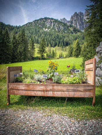 Herbal bed in the mountains Austria Bed Green Color Herbs Marie-Beatrice Rich Nature Photography Olympus Tourist Attraction  Trees Day Herbal Bed Moody Nature Moody Photography Mountain Mountain Range Nature No People Outdoors Summer Tourist Destination Tree Wood - Material