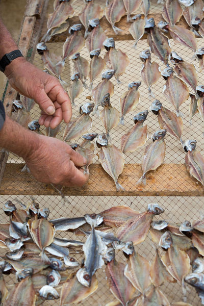 Herring Old Man Tradition Work Abundance Body Part Day Drying Fish Drying Rack Finger Fish Fisherman Fishing Food Food And Drink Hand High Angle View Holding Human Body Part Human Hand Large Group Of Objects Men One Person Preparing Real People