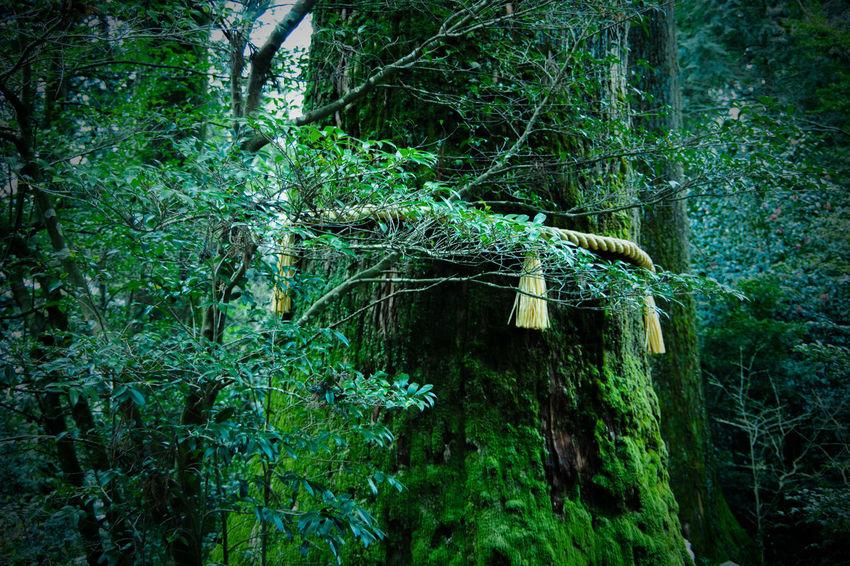 2018 Architecture Hakone Shrine Japan Japanese Culture PENTAX K-S2 Shenmu Shrine