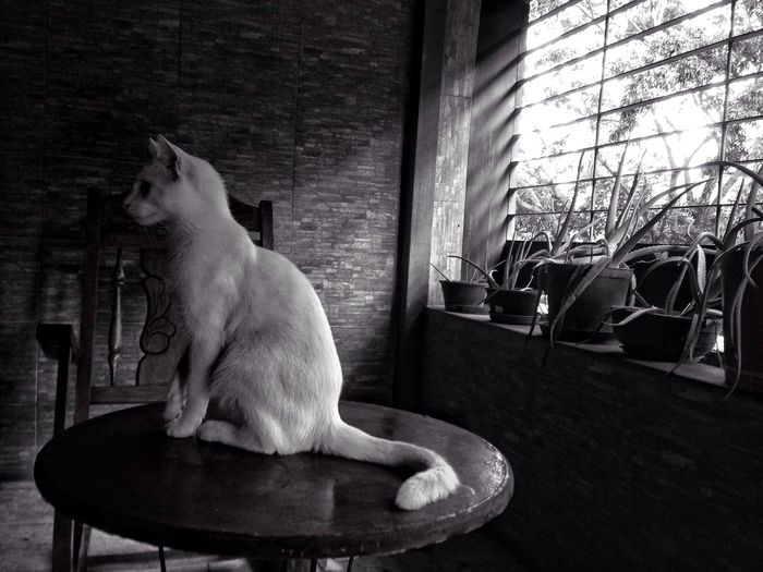 Light Cat Blackandwhite Light And Shadow