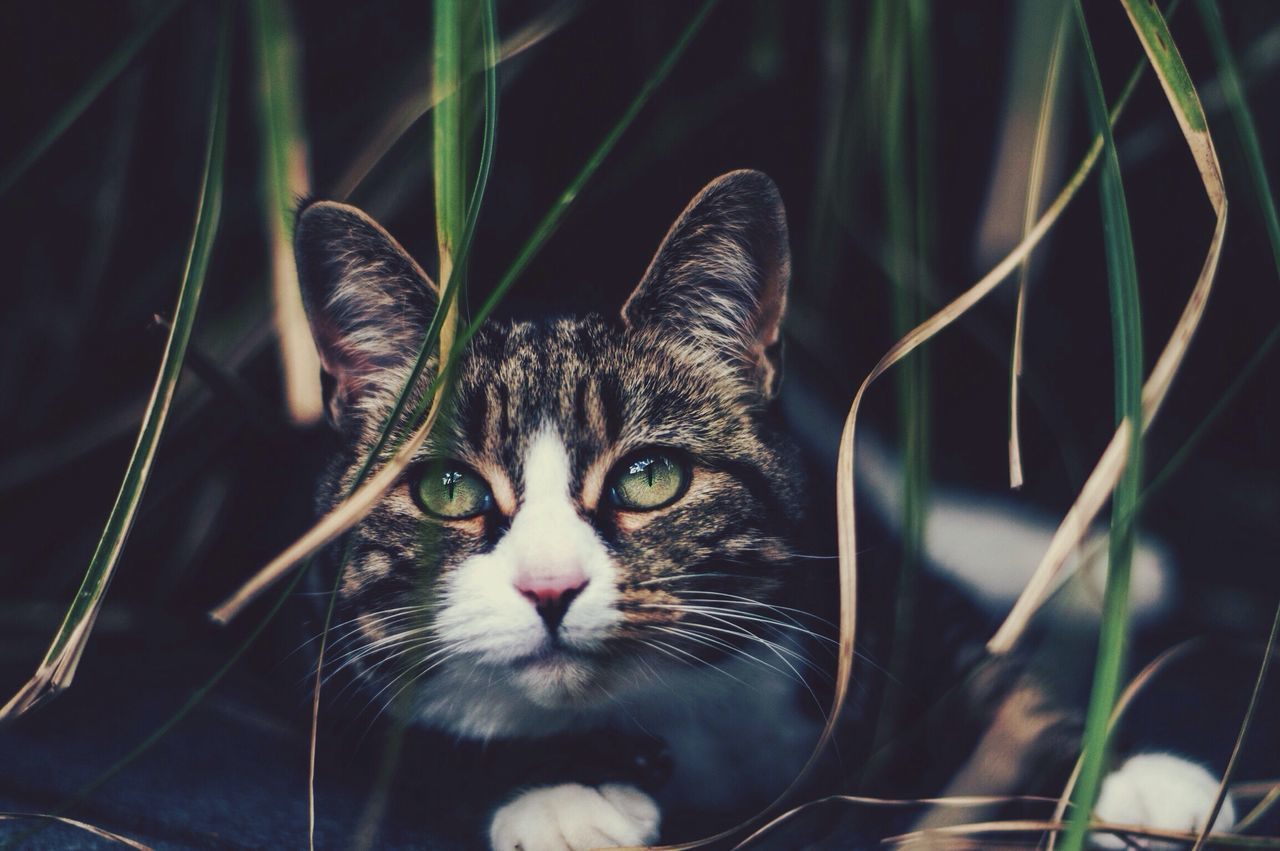 Close-Up Portrait Of Cat Resting By Grass