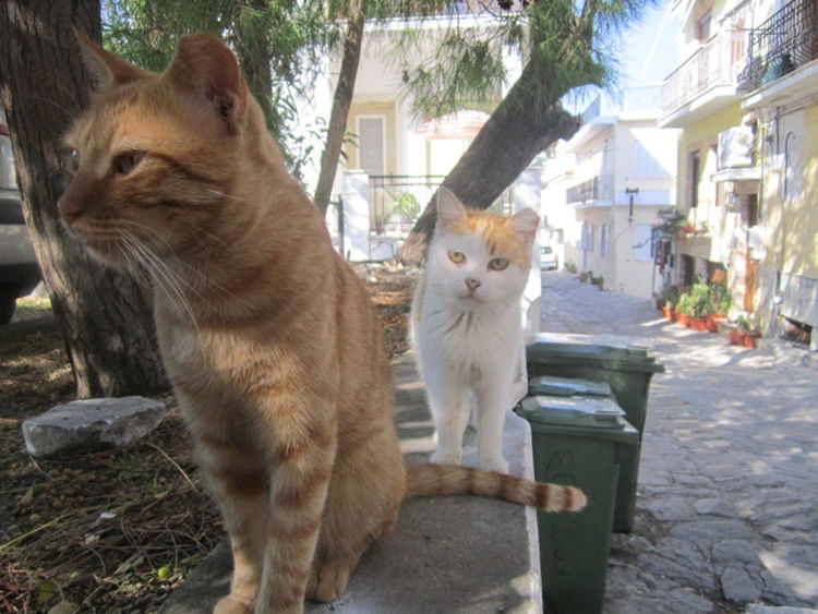 Animal Cat Close-up Curiosity Feline Greek Cats Nature Skiathos Street Cat