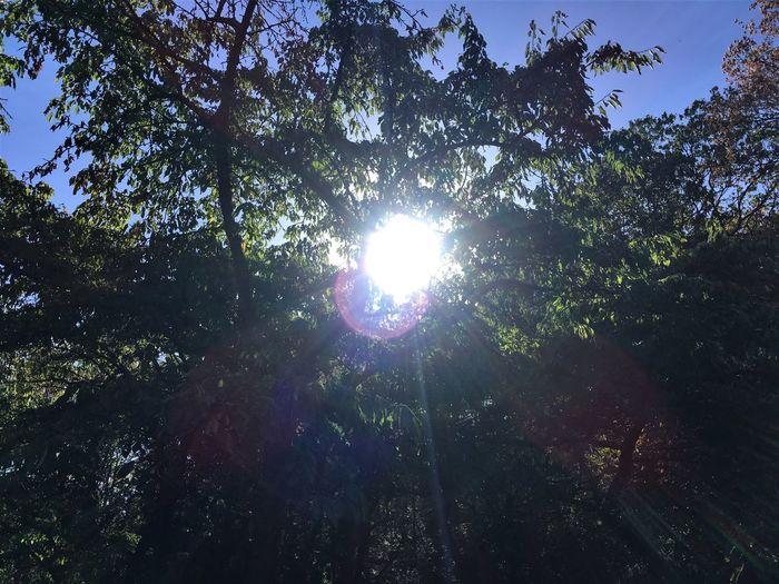 Sunbeams through a tree Tree Sunlight Beauty In Nature Scenics - Nature Bright Nature