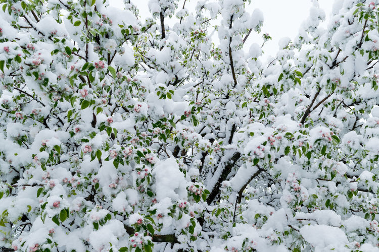 Full frame shot of flowering plant during winter