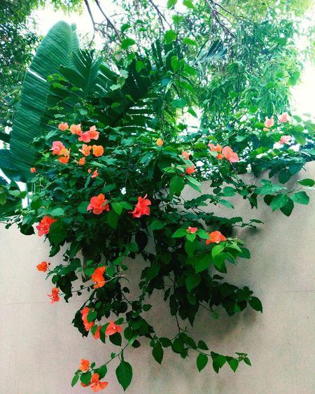 Everlast Nature Landscape Flowers Brightcolors EyeEm Nature Lover Instagram