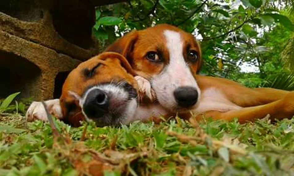 🐶🐶❤📷 Two Is Better Than One Animal Themes Dog Domestic Animals One Animal Pets Mammal Relaxation Resting Animal Head  Lying Down Zoology Green Color Outdoors Day Loyalty No People Surface Level Animal Shekelsphotography