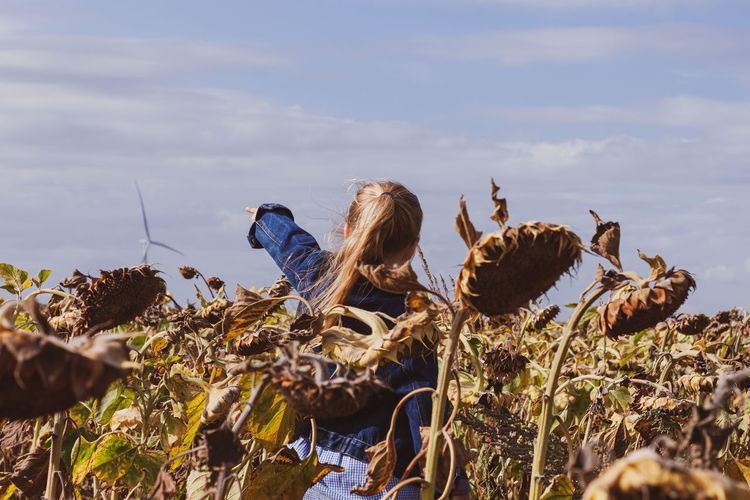 Blond hair child girl in denim jacket walks in sunflowers field wind turbines background. eco energy