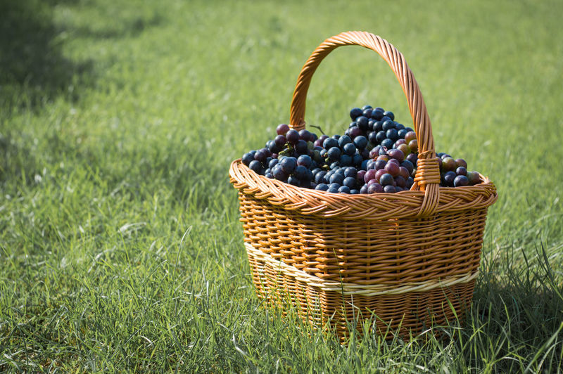 Close-Up Of Red Grapes In Basket On Field