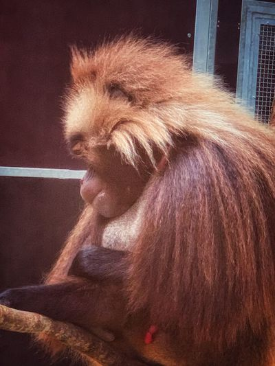 Mammal Primate